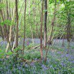 Stonelynk Wood